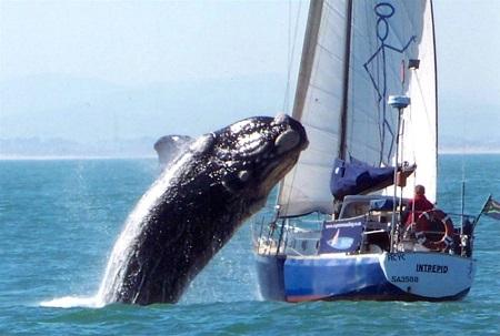 кит и яхта под парусом